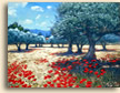 Olive Grove Poppies, Cassis